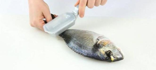 Технология первичной обработки рыбы