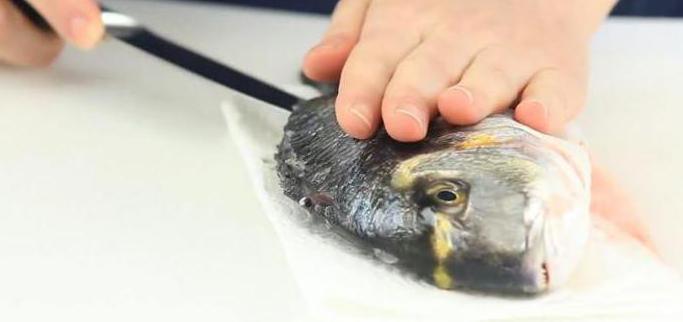 Первичная обработка рыбы с костным скелетом