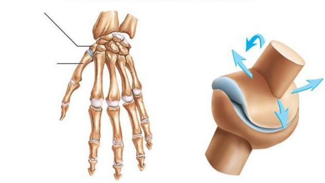 Классификация суставов по строению