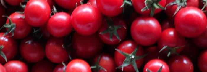 Бакинские помидоры: описание, фото.