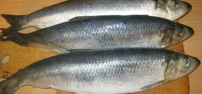 how to salt herring at home is delicious