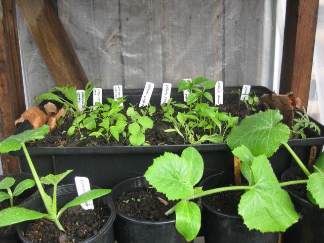 Теплица для выращивания огурцов круглый год 15