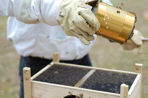 пластиковая кормушка для пчел