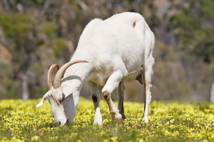 аллергия на коровий белок чем кормить