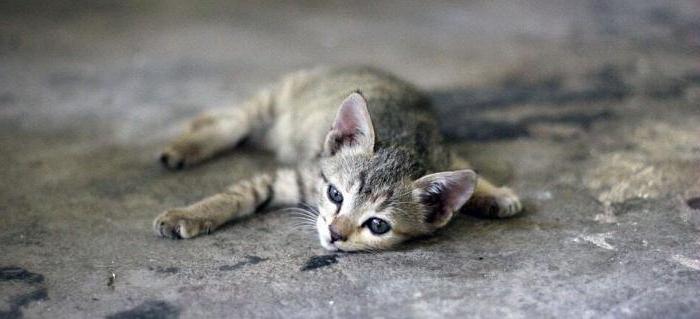 понос у котенка 2 месяца