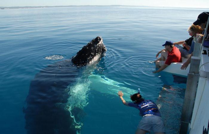 киты морские животные