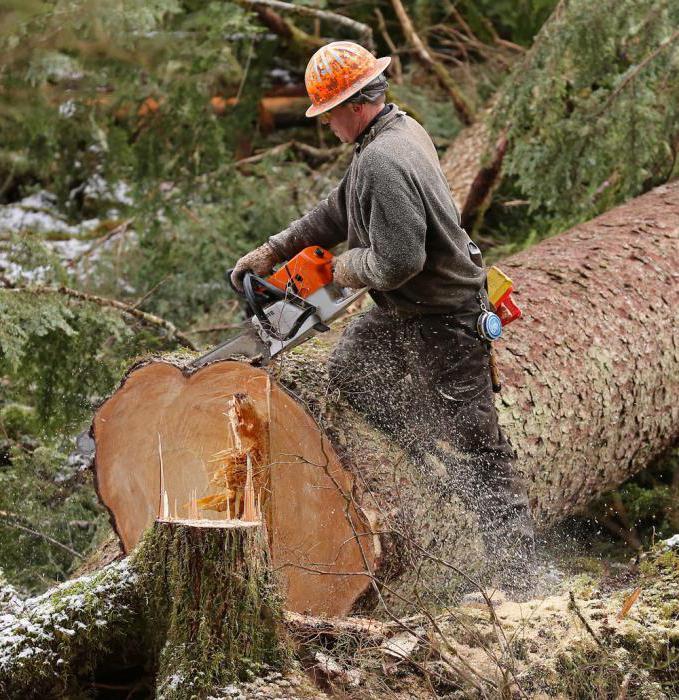 используют картинки пилят лес после стирки