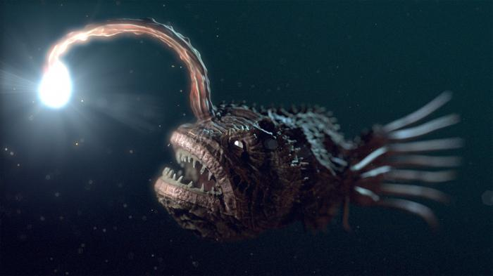 существа живущие на дне океана