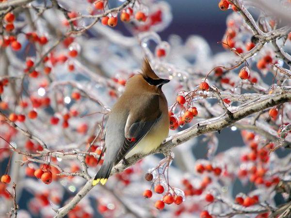 а богдарин знакомые птицы