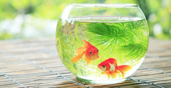 фразеологизмы в рыбьем супе на рыбьем меху нем как рыба