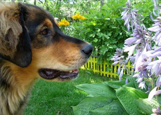 почему у собаки пахнет изо рта аммиаком