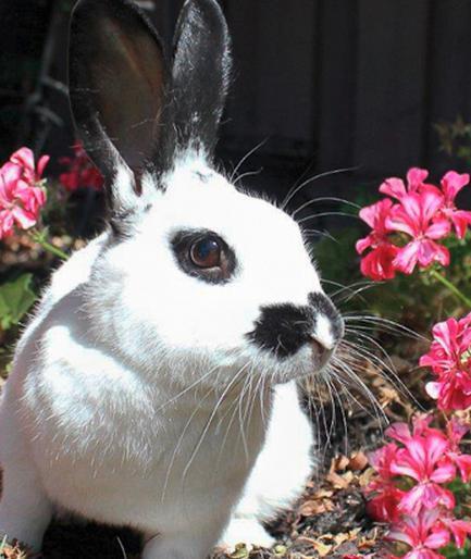 у кролика вздулся живот и понос