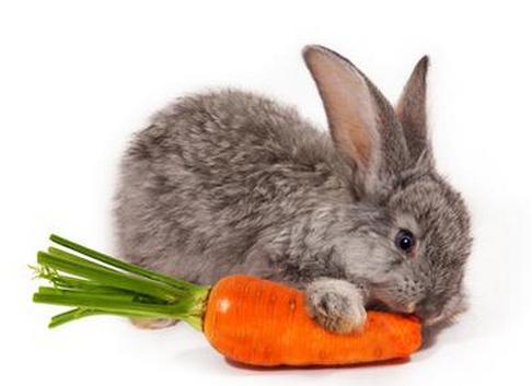 у кролика вздулся живот как лечить
