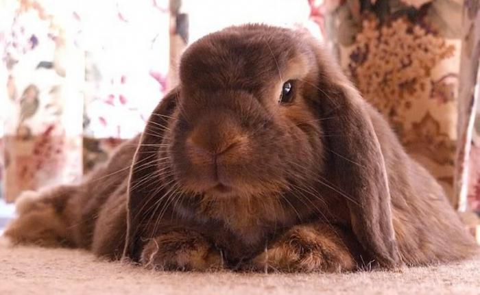почему дохнут кролики и вздувается живот