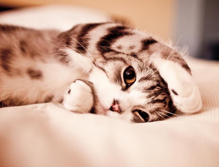 сильное сотрясение у кота
