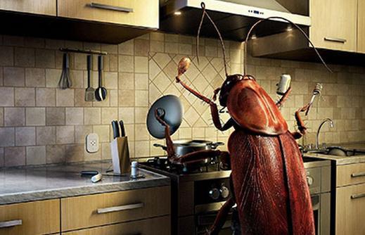аллергия на тараканов фото