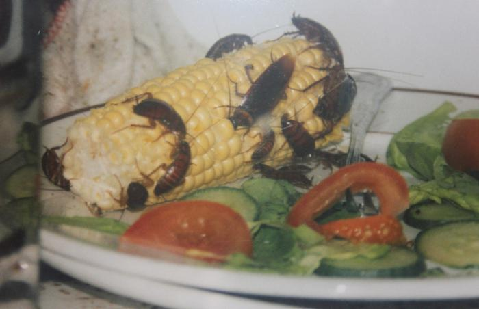 новый вид тараканов