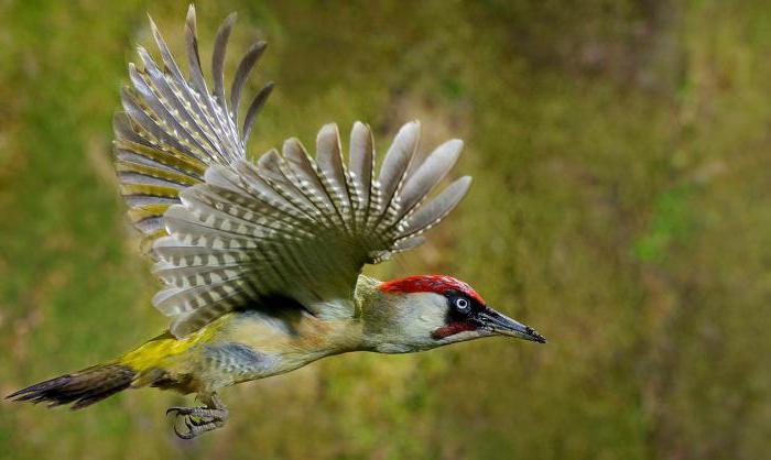 Такие разные птицы Подмосковья
