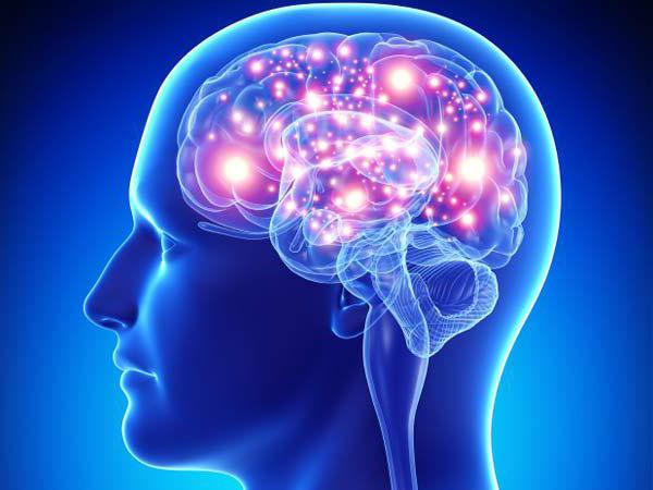головной мозг ствол головного мозга