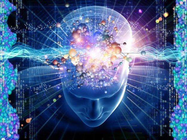 ствол головного мозга строение и функции