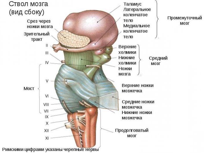 диффузная опухоль ствола головного мозга