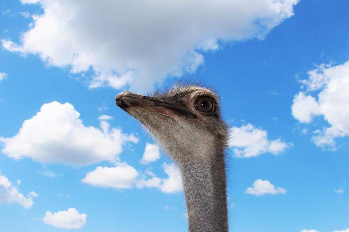 «Омский страус» (страусиная ферма, Омск): режим работы, адрес, экскурсия