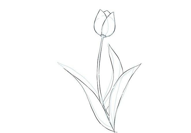 нарисовать тюльпаны акварелью