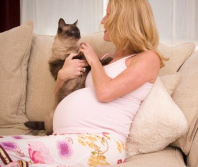 Расшифровка анализа на токсоплазмоз при беременности