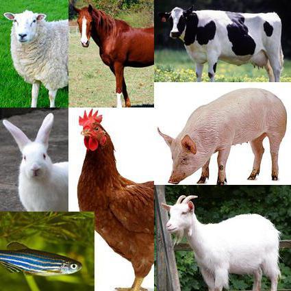 Чеми спрей: инструкция по применению от пролежней для животных и.