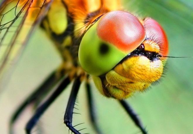 как называется животное с большими глазами