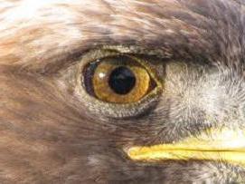 радиоперехват или орлиный глаз