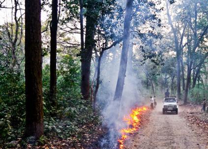 Противопожарные минерализованные полосы