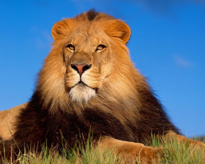 кÑ'о можеÑ' победиÑ'ÑŒ льва