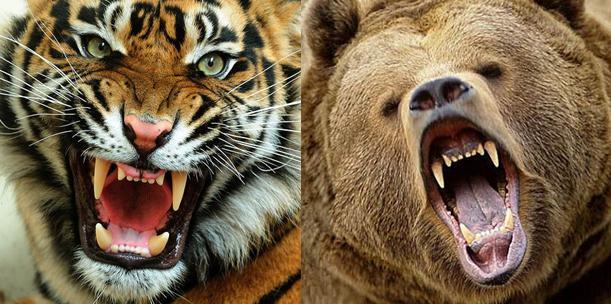 кÑ'о сильнее льва