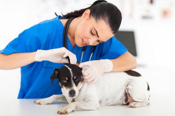 лахезис гомеопатия показания к применению в ветеринарии