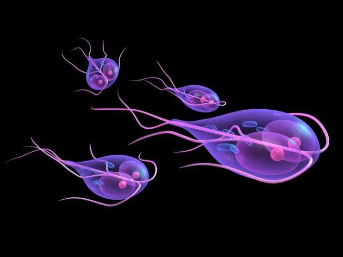 таблетки против паразитов человека