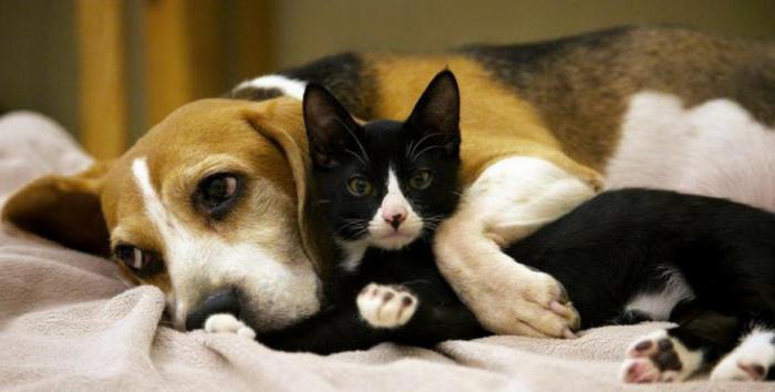 В Україні заборонять домашніх тварин