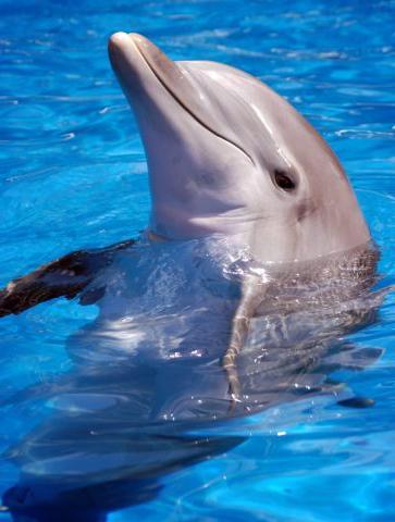 спят ли дельфины