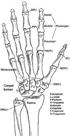 how to remember bones of hand