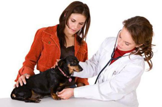 зоостатус ветеринарная клиника