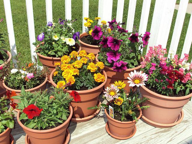 домашние цветы уход в домашних условиях