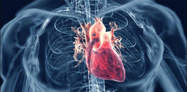 давление артериальное и сердечное