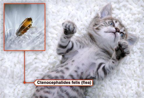 какие болезни от паразитов