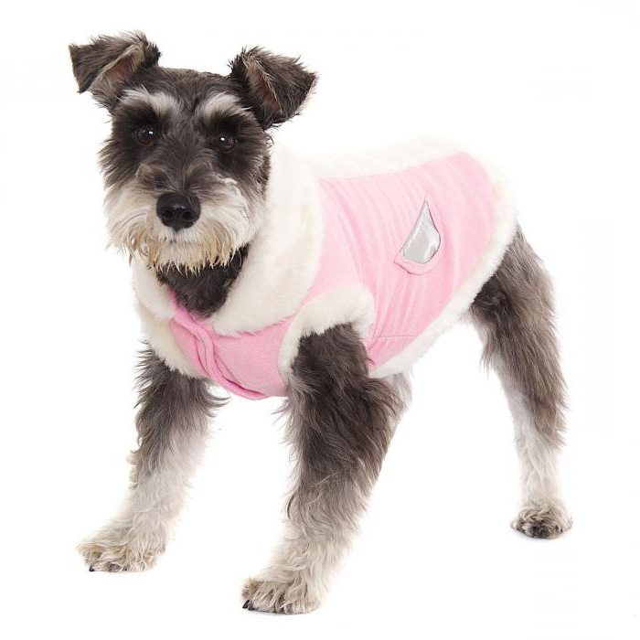 Домашнее производство: одежда для собак