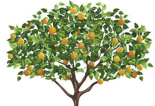 Загадки про деревья с ответами