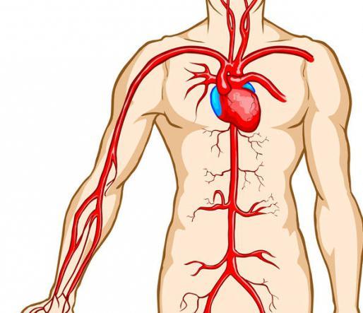 Большой круг кровообращения, схема