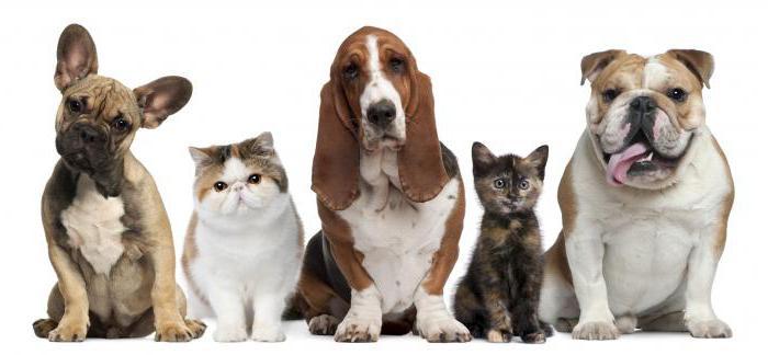 фразеологизмы с животными примеры