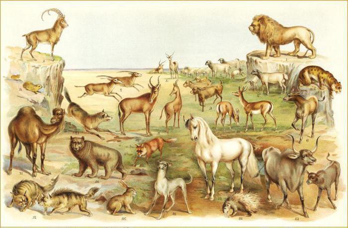 фразеологизмы про животных