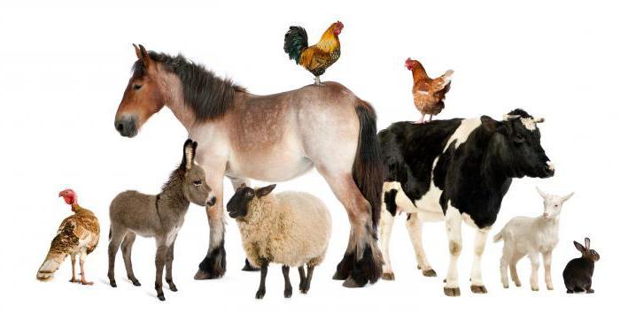 животные в русских фразеологизмах
