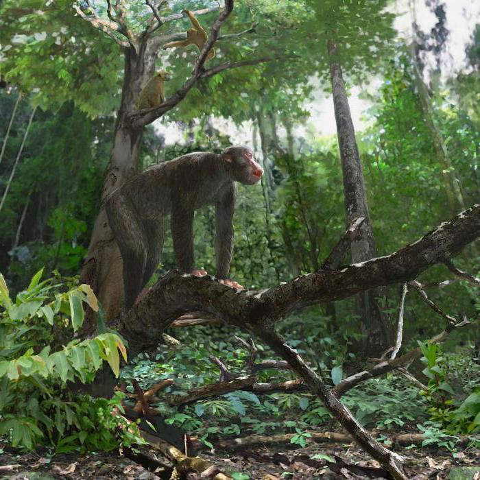 древняя человекообразная обезьяна